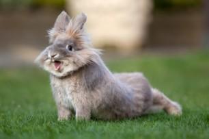 Non non non toujours pas de photo de moi en train de faire du yoga (mais ma sœur m'appelait Bugs Bunny quand j'étais gamine, alors c'est un peu pareil)