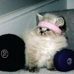 Challenge yogique du mois de mars #Semaine 2