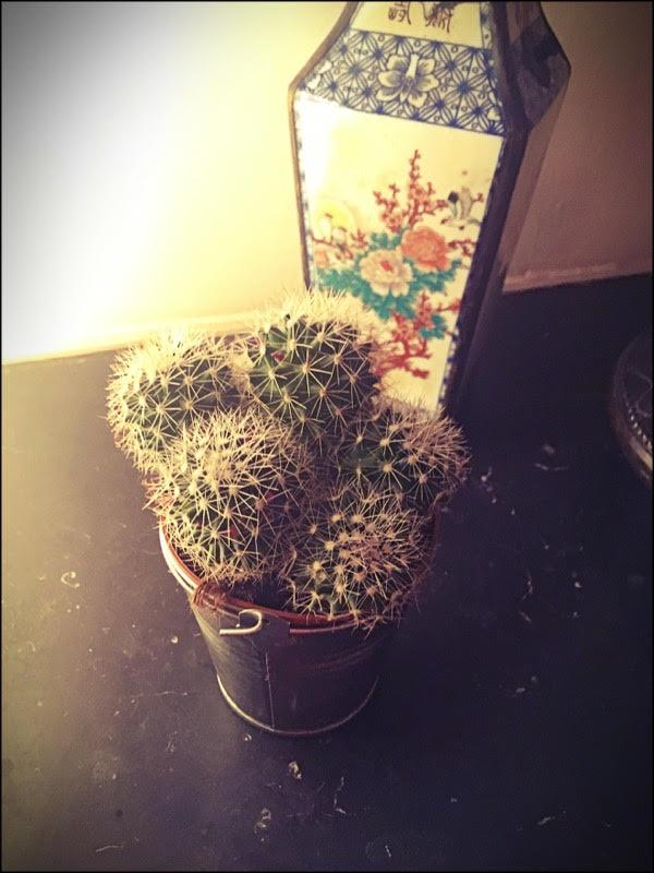 Mon nouveau copain le cactus