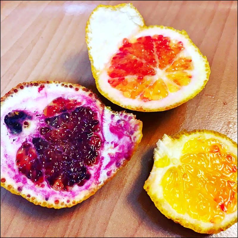 Oranges mulicolores trop belles (petit producteur sicilien)